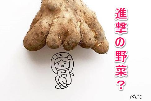 Instagram人気アカウントべじこ